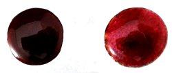 画像1: A021 濃赤